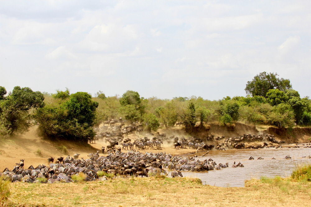 Sand River Mara Migration