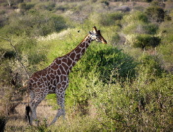 Exkursion Studenten Biologie Kenia