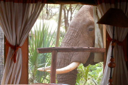 safari-riftvalley-kenia elephant bedroomcamp
